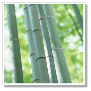 本物の竹を容れ物に使った水ようかん